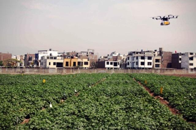Drone sobre campos de papas en Uganda