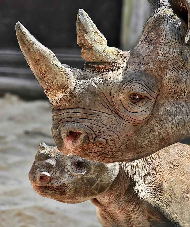Madre y bebe rinoceronte. Foto:  Klaus Wiese