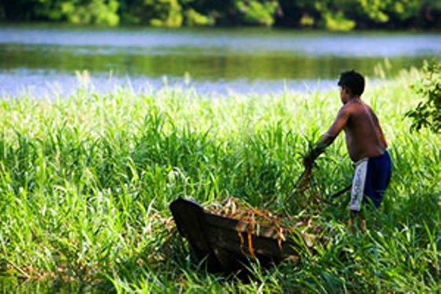 Un residente del Bosque Nacional de Tapajós recoge hojas y plantas silvestres para preparar una comida. Foto ONU/ Eskinder Debebe