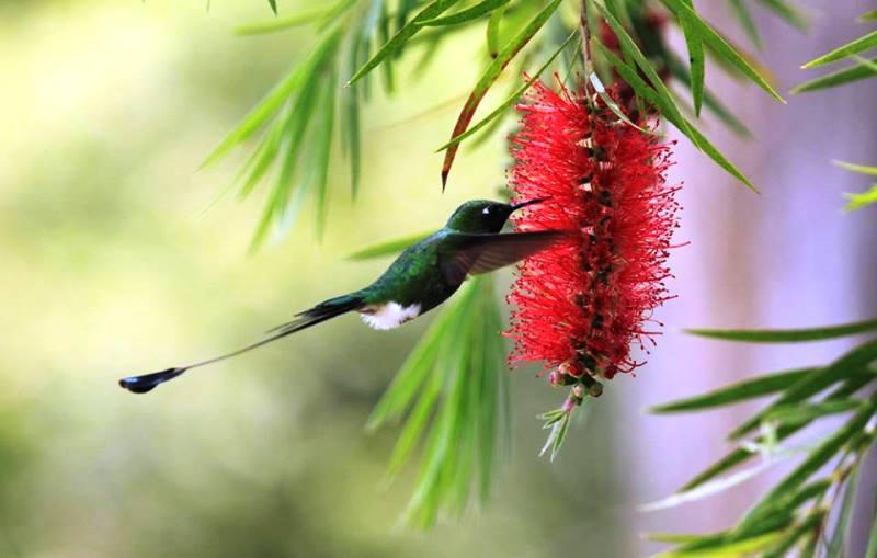 Colibri. Foto Edgloris Marys