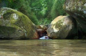 Parque-Nacional-Henry-Pitti-770x500