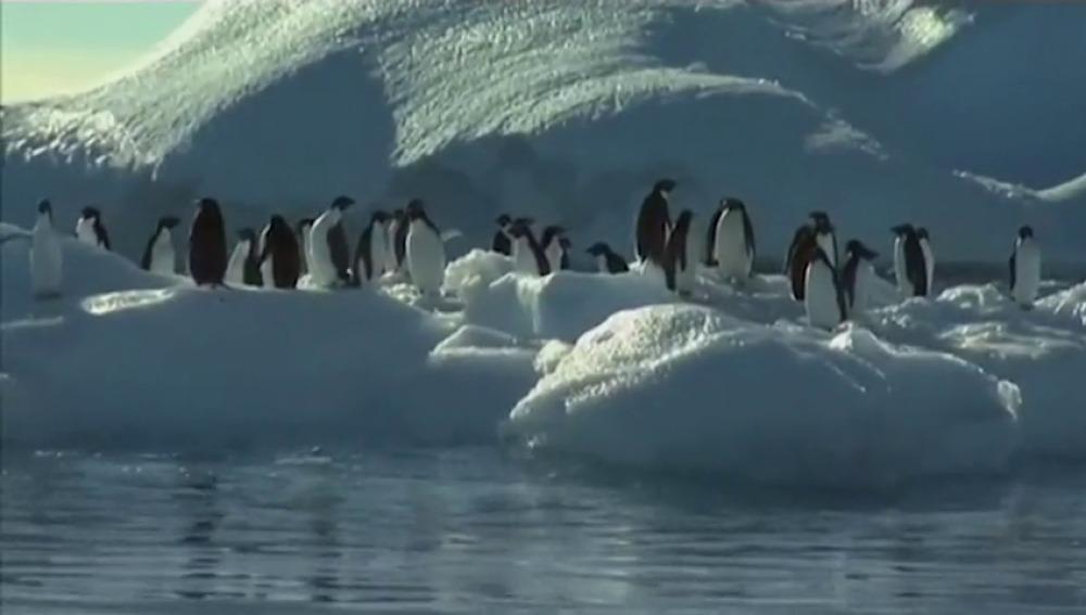 Los pinguinos tendrán protección de su ecosistema