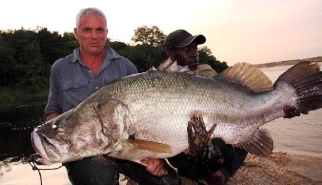 Perca del Nilo gigante en Lago Victoria