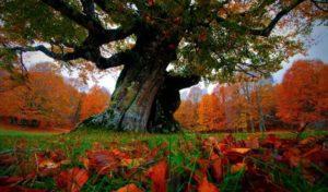 Bosques para la vida