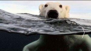 Los efectos del cambio climático en la Antartida