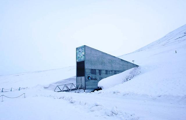 """En el archipiélago de Svalbard, próximo al círculo polar ártico, el gobierno de Noruega mantiene una """"caja fuerte de semillas"""" bajo centenares de metros de hielo y rocas"""