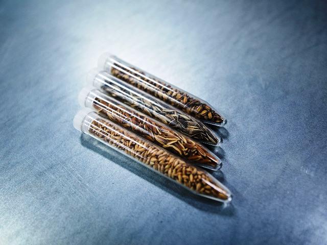 La salvaguarda debe ser absoluta y las semillas deben ser aptas aún en los siglos venideros
