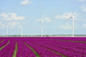 Parque eólico en Holanda