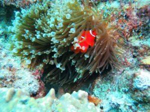 Arrecife de coral en Australia- Foto: Adriana Humanes