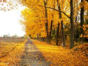 1 arboles otoño