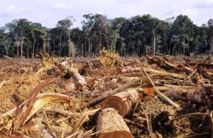 Deforestación nefasta para el planeta