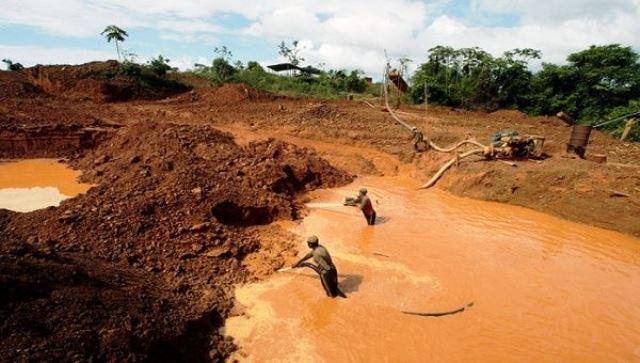 Muerte por mercurio a nuestra biodiversidad