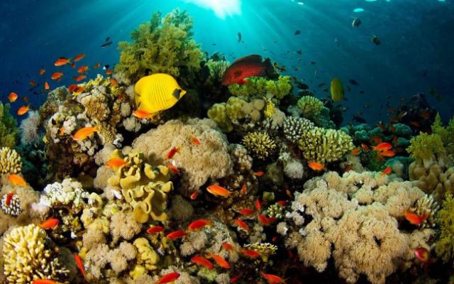 Arrecifes coralinos son las selvas del mar