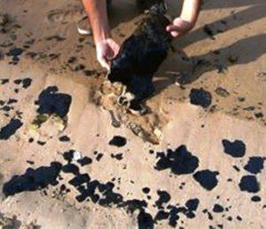 Desde Río Caribe, estado Sucre nos llega esta imagen del derrame en sus playas. Foto: Carmen Josefina De Lascote
