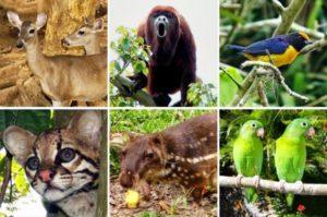 Biodiversidad en Venezuela