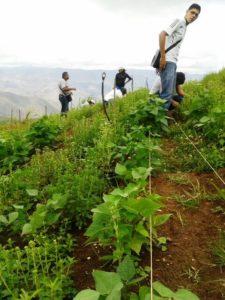 Estudiantes en campo trabajando