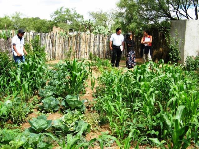 Agrocultivos familares