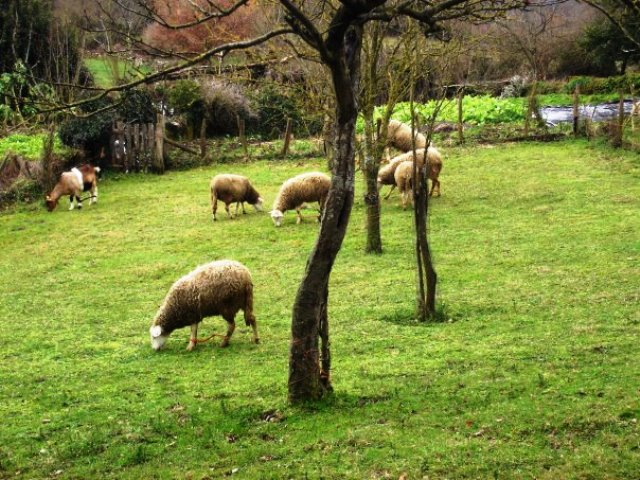Los parajes naturales del Camino de Santiago