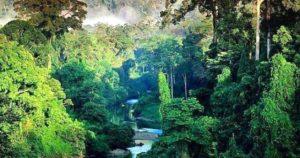 La bella Selva de Amazonas