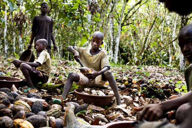 Niños trabajan en la faena del cacao