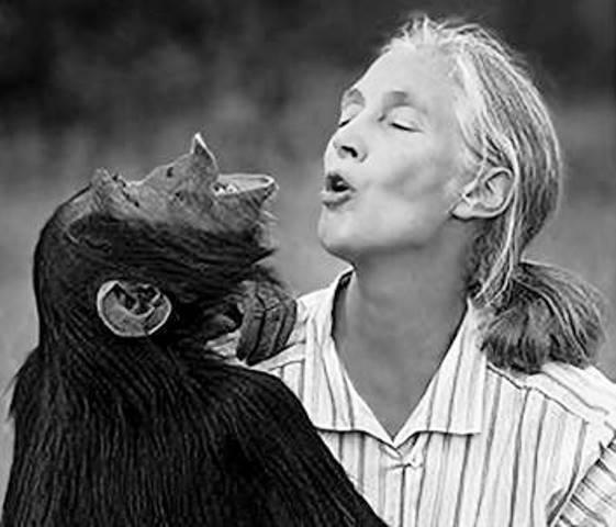 Jane Goodal y su comunicación con chimpances