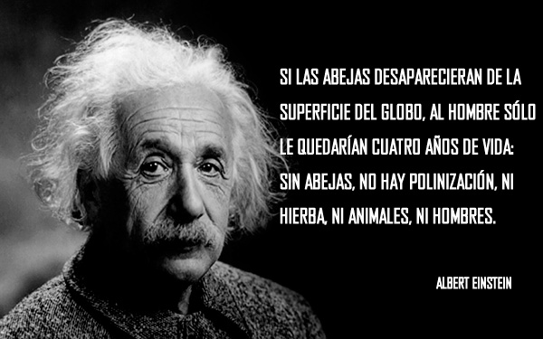 Albert Einstein ya lo advirtió