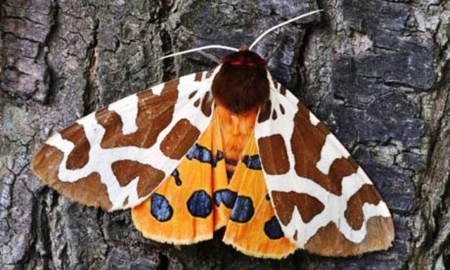 El planeta puede vivir sin nosotros pero no sin insectos