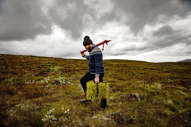 Un gran esfuerzo de reforestación en Islandia