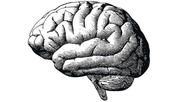 El almidón de las plantas fue fundamental para el desarrollo del cerebro.