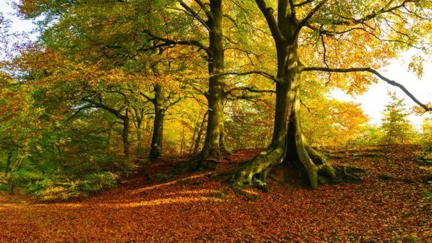 Hace millones de años las plantas se adaptaron a los árboles para sobrevivir.
