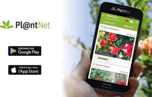 Plant Net App al servicio de la naturaleza