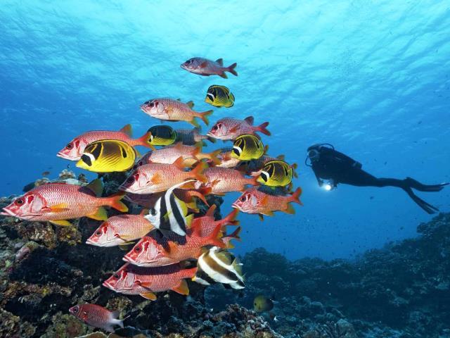 Barrera de coral amenazada