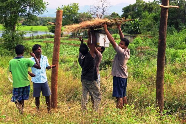 Granjeros srilankeses instalando una cerca abejera