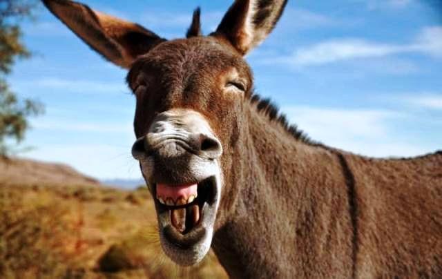 Pobres burros