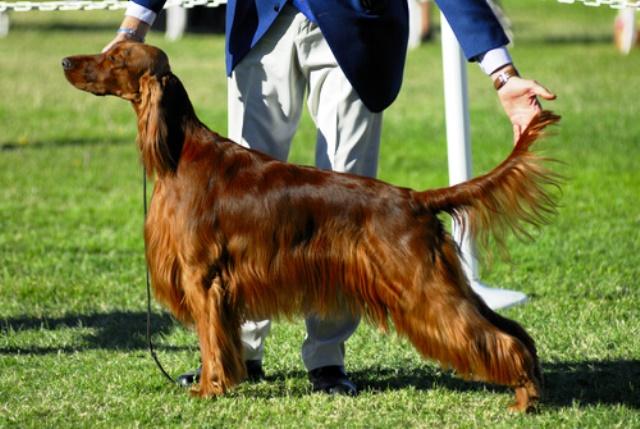 El Convenio incluye los concursos de belleza canina