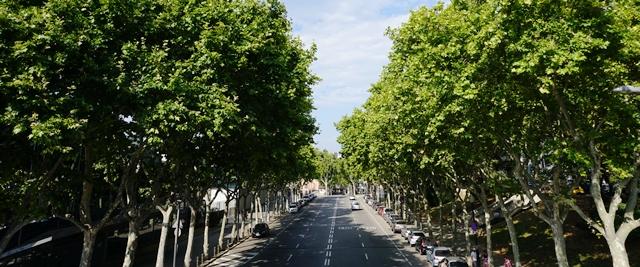 Vista de una calle arbolada en la ciudad de Barcelona España. Foto FAO Yujuan Che