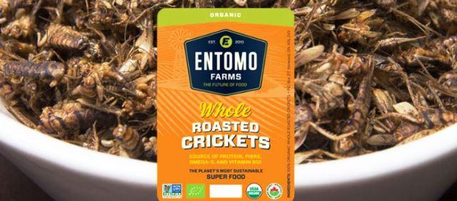Entomo farms- Grillos tostados