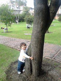 Hay que dejar que los niños aprendan a amar a los árboles