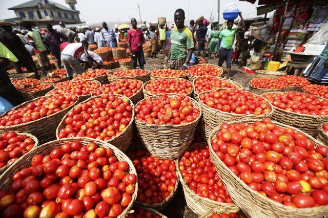 Producción agrícola en Kenya