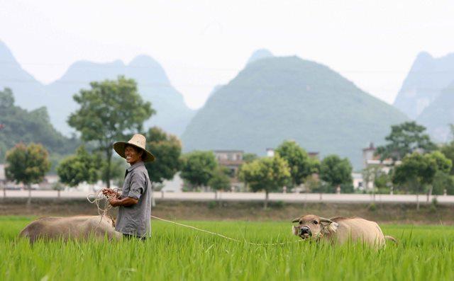 El plan de agricultura busca consolidarse  en China