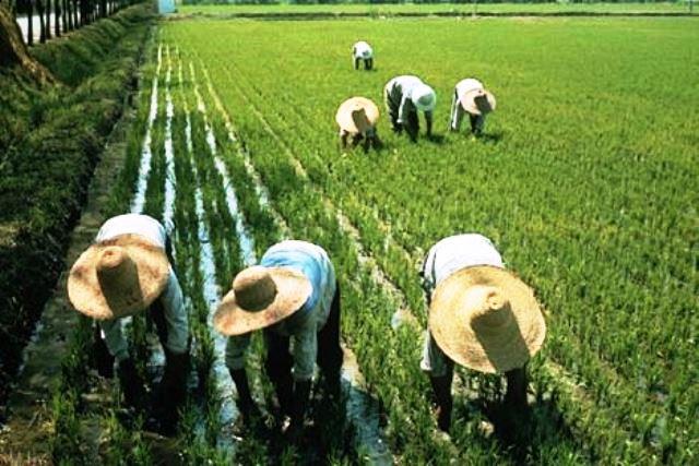 La agricultura china avanza